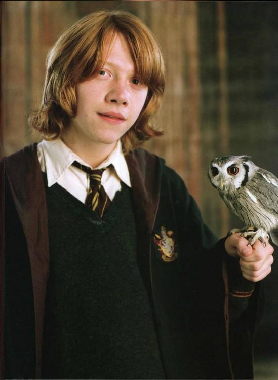 Ron y su lechuza