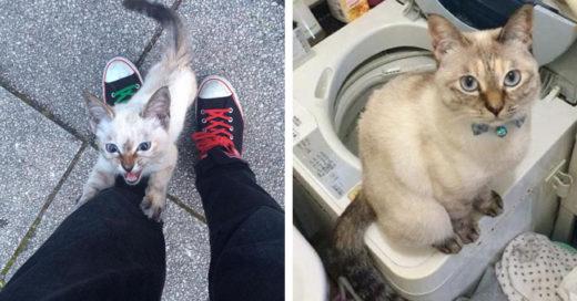 gatito eligió a su humano en un parque y ahora nadie los podrá separar