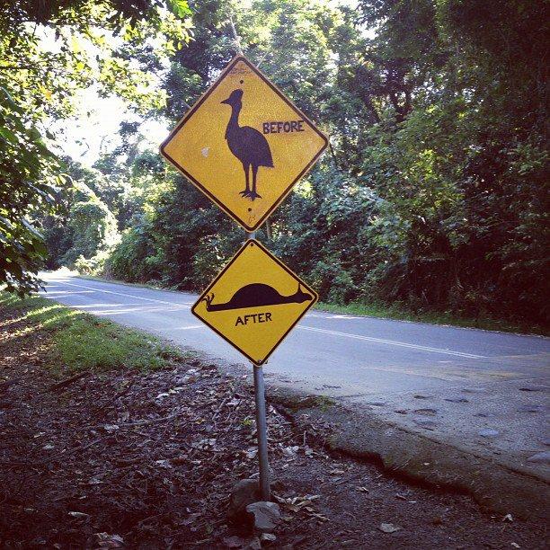 favor de poner atención en los correcaminos y pavo reales