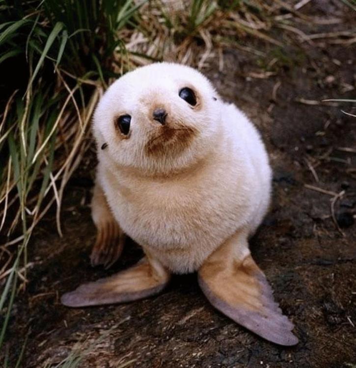 imagen de una pequeña foca bebé sentada en el suelo
