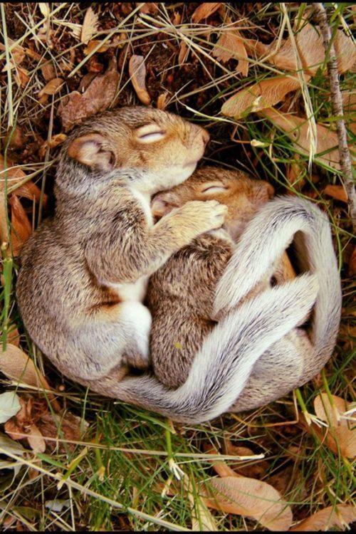 Foto de dos ardillas bebés dormidas en un hoyo