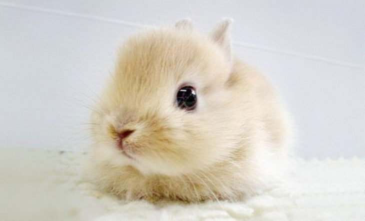 foto de un pequeño conejo bebé
