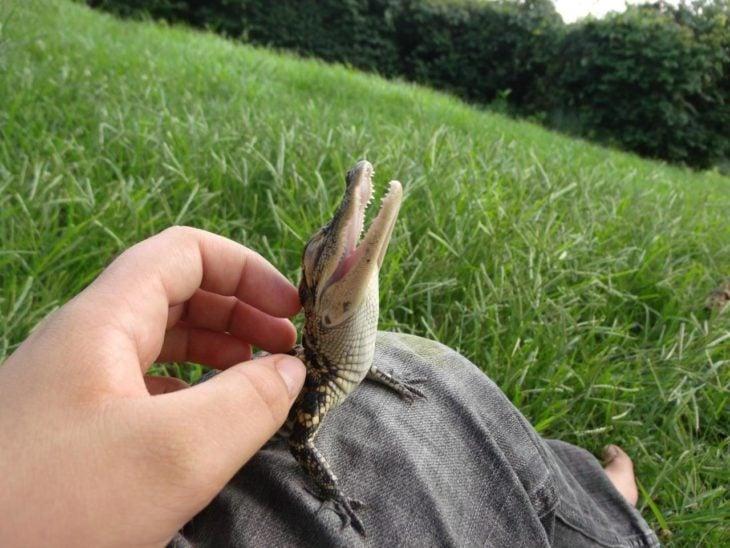 foto de un cocodrilo bebé en la pierna de un chico