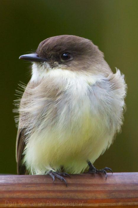 foto de un pequeño pájaro bebé