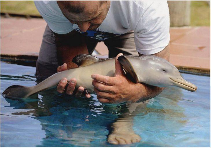 imagen de un hombre cargando a un pequeño delfín