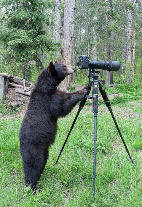 foto de un oso detrás de una cámara fotográfica