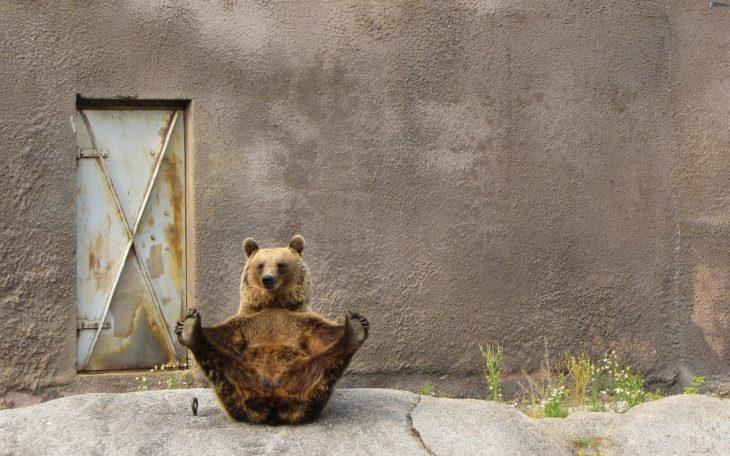foto de un oso sentado con las patas hacia arriba