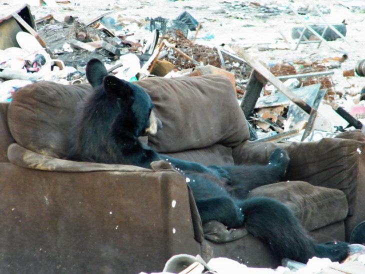 foto de un oso acostado en un sillón