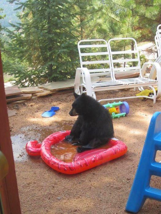 foto de un oso sentado sobre una pequeña piscina