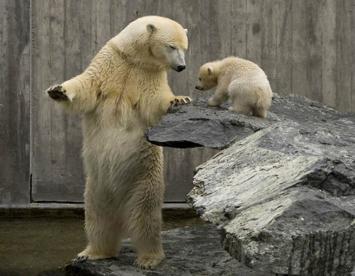 foto de un oso con su pequeño oso bebé
