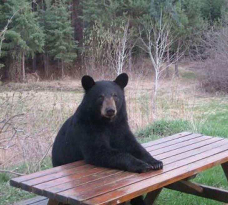 un oso negro sentado en una mesa al aire libre