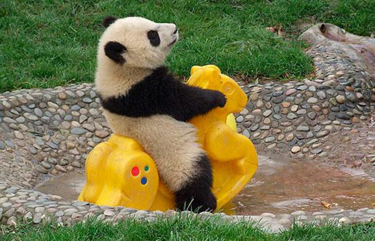 oso panda bebé jugando sobre un montable amarillo en forma de caballo