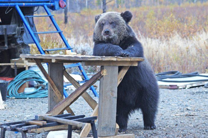 Foto de un oso recargado sobre una mesa de madera