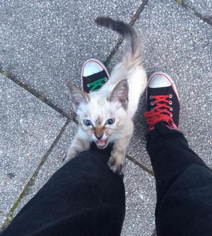 gatita que eligió a su humano en un parque