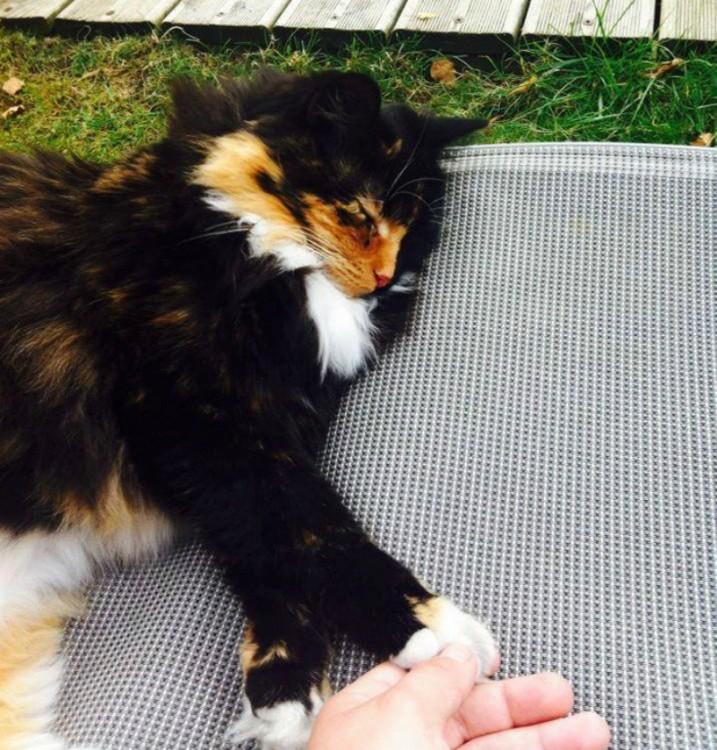 fotografía de una gatita acostada sobre un pequeño colchón