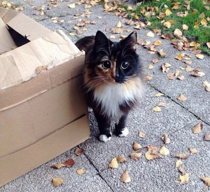 fotografía de una gatita parada a un lado de una caja de cartón