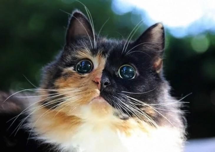 Conoce a Jasmine la gatita ciega que te robará el corazón