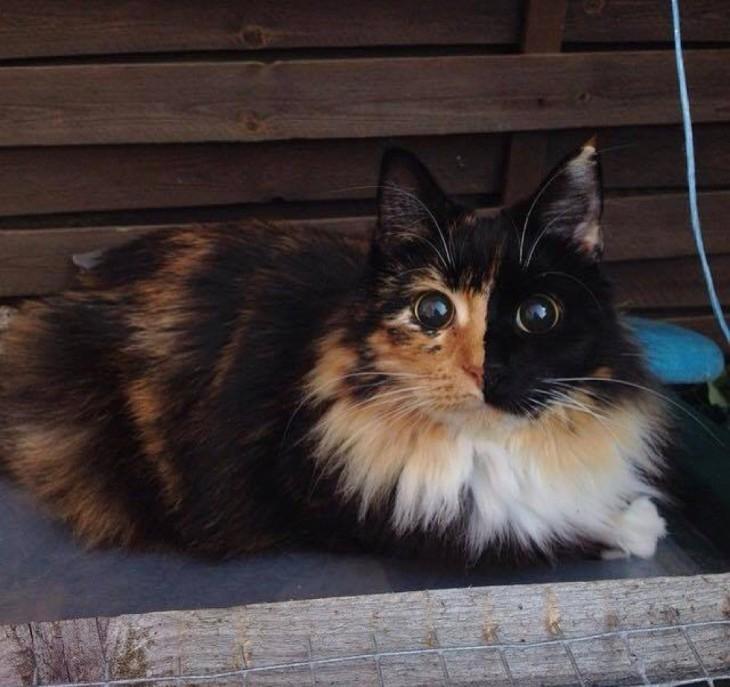 fotografía de una gatita acostada dentro de una caja de madera