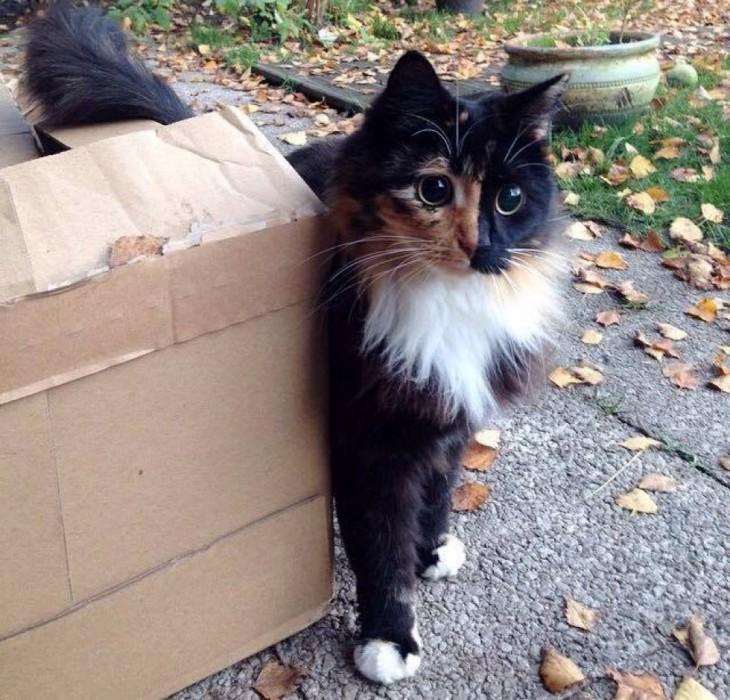 fotografía de un gatito a un costado de una caja de cartón