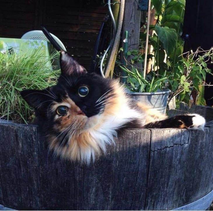 gatita ciega dentro de un balde de madera entre plantas en el patio de una casa