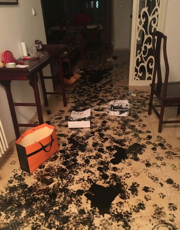 marcas de tinta china con huellas de perro por un departamento