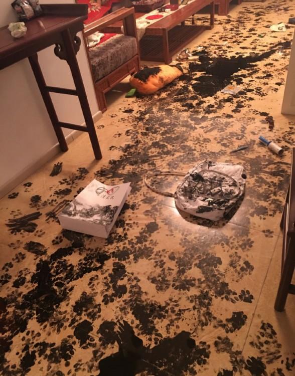 desastre en el suelo a causa de un perro husky