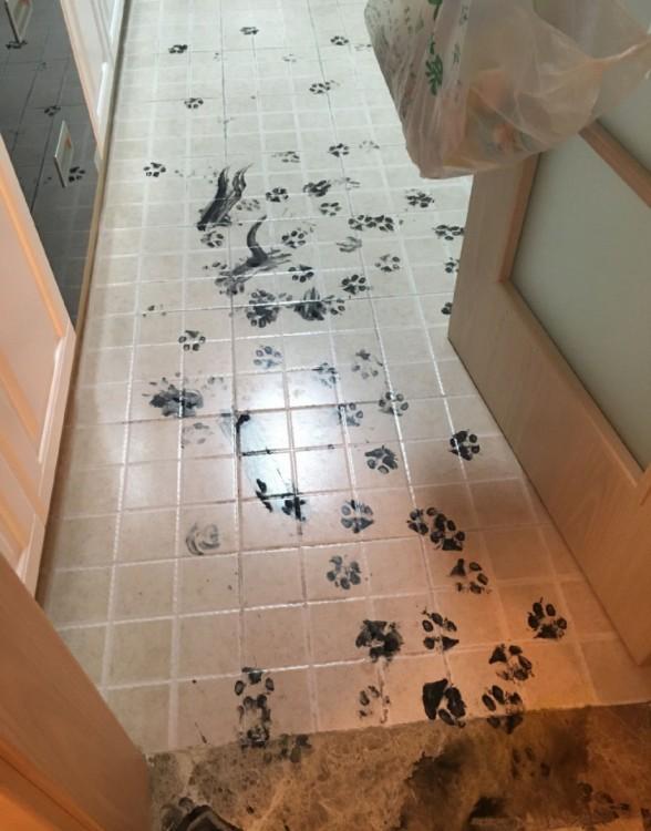 huellas de perro con tinta china en el suelo