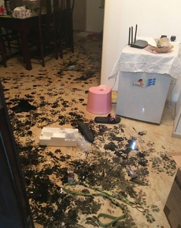 un perro husky se quedo solo en casa y mancho toda la casa con tinta china