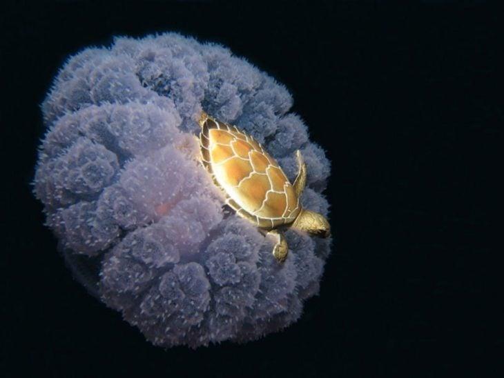 Una tortuga arriba de una medusa
