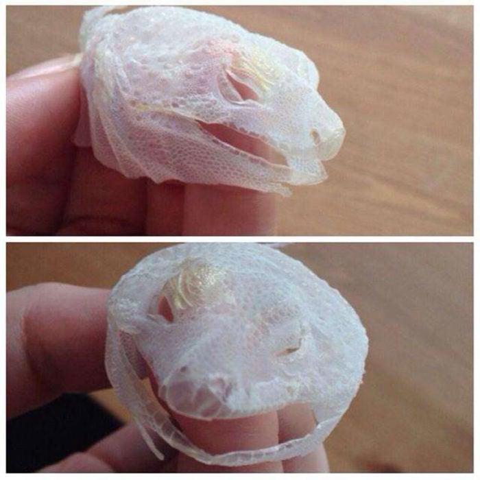 esquelto de piel de una iguana