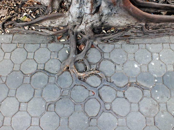raíces del árbol acoplado a la naturaleza