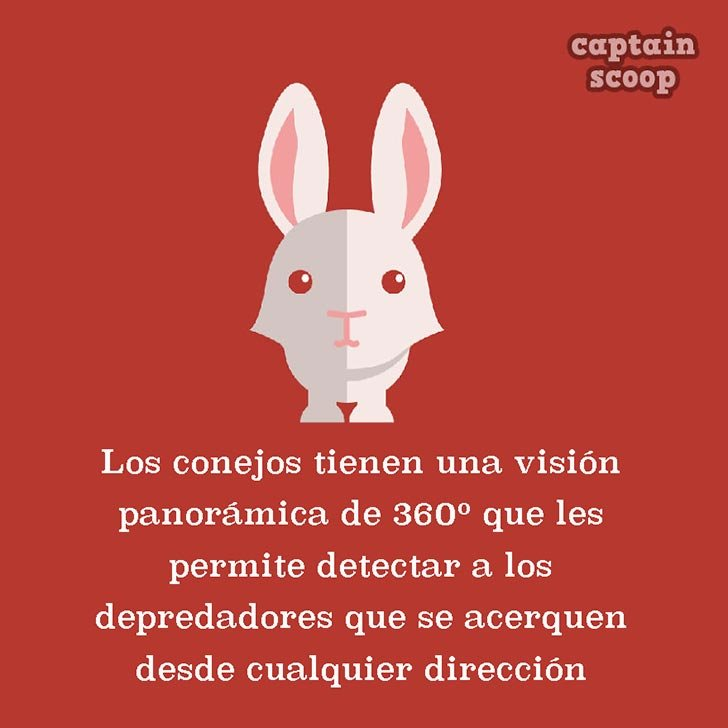 ilustración con un conejo y datos acerca de los conejos