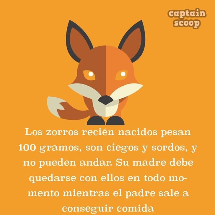 ilustración que nos cuenta un poco acerca de los zorros