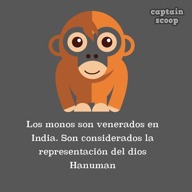 ilustración de un mono a cargo de Captain Scoop