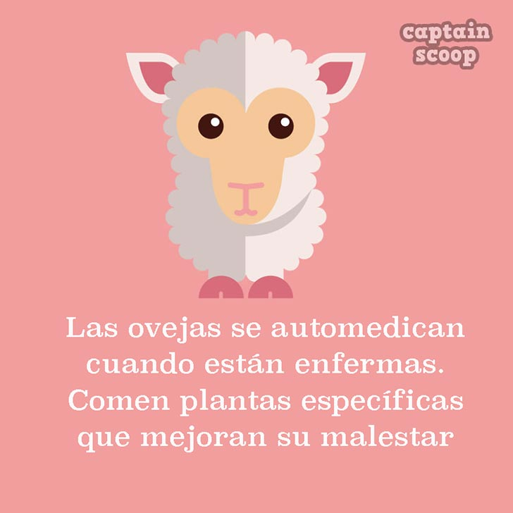 ilustración con una oveja