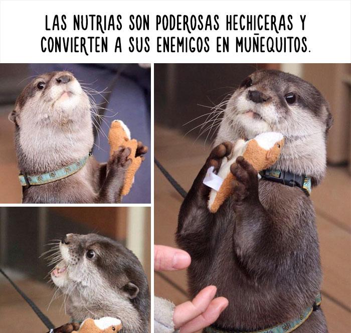 collage de imágenes de nutrias