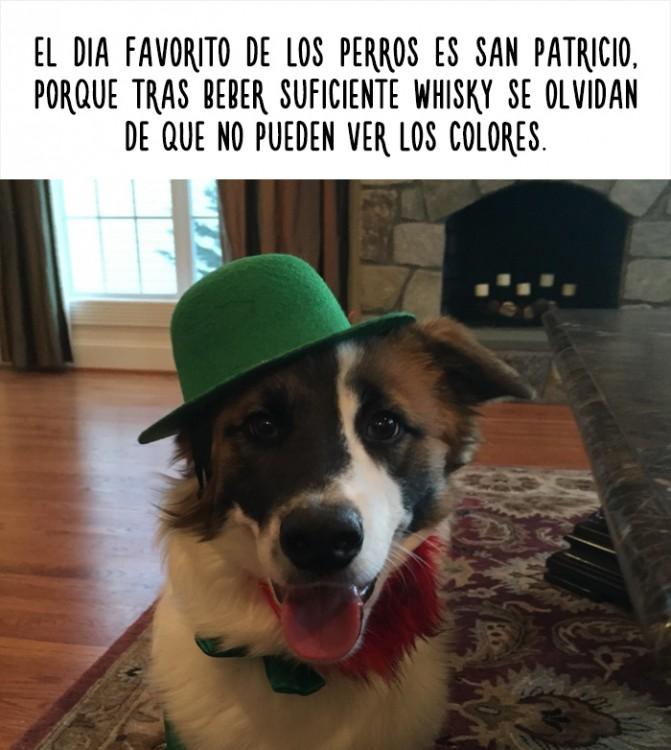 fotografía de un perro con sombrero que trae un dato curioso
