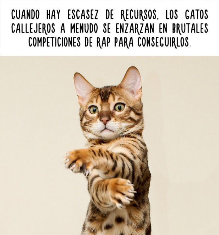 imagen de un gato con un dato curioso acerca de ellos