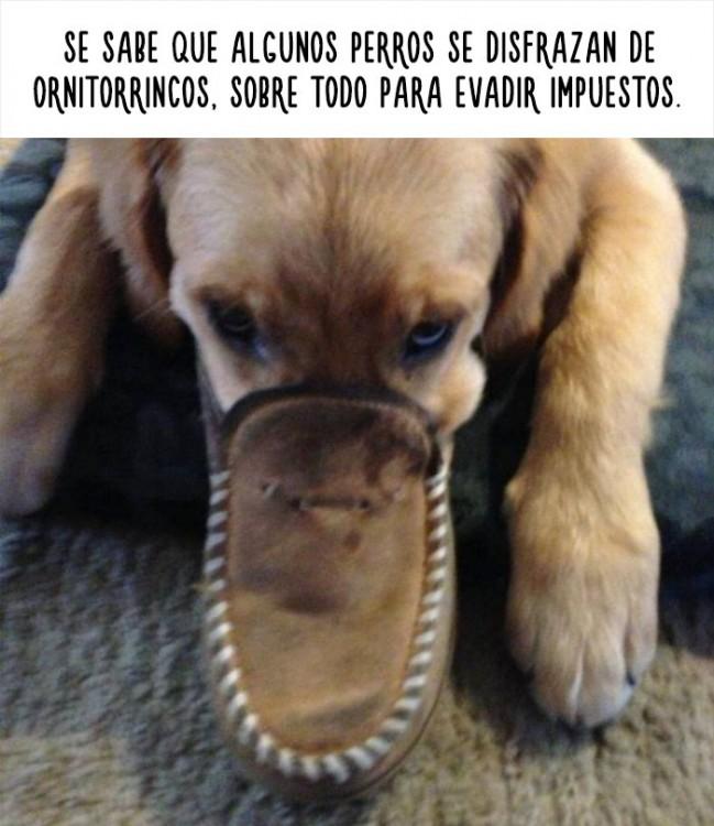 imagen de un perro con el hocico dentro de un zapato