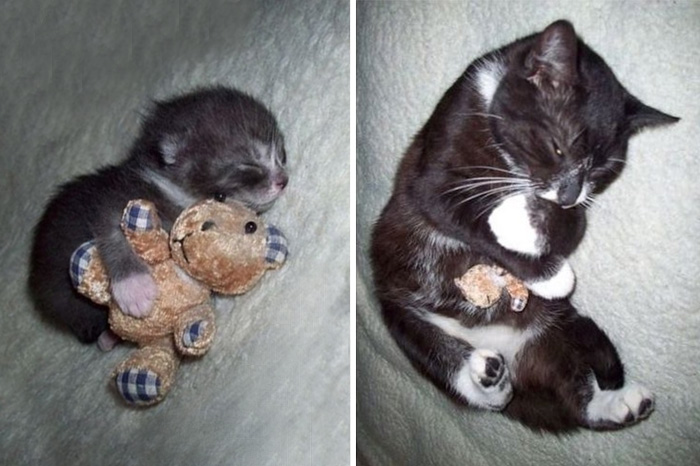gatito negro con su perrito de peluche