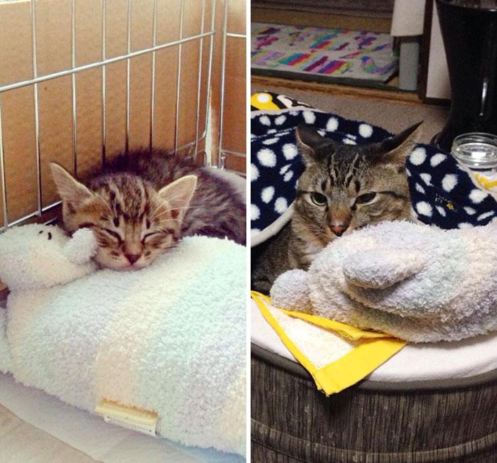 gato con su misma almohada