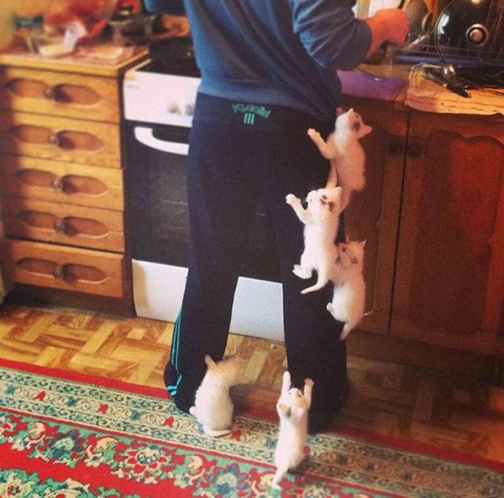 5 gatitos bebés se suben en una persona que está cocinando