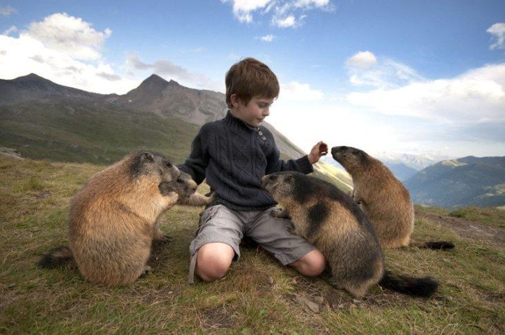 marmotas oliendo a niño