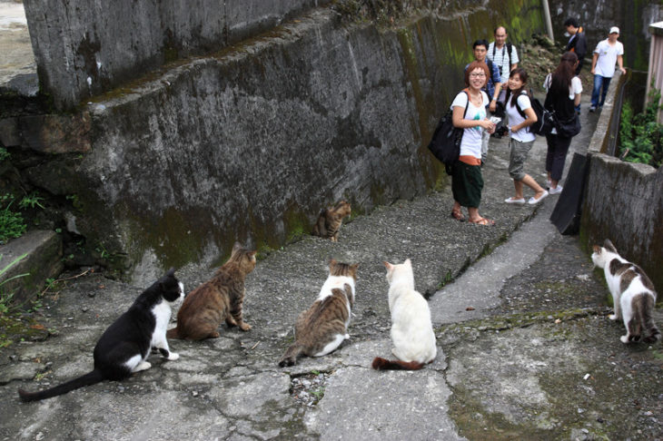 gatitos en un callejón sorprenden a turistas