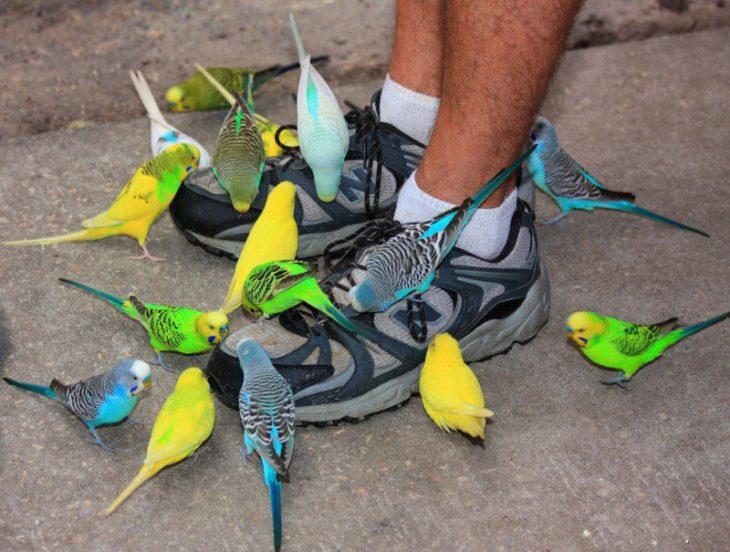 pajaritos en los pies de un hombre