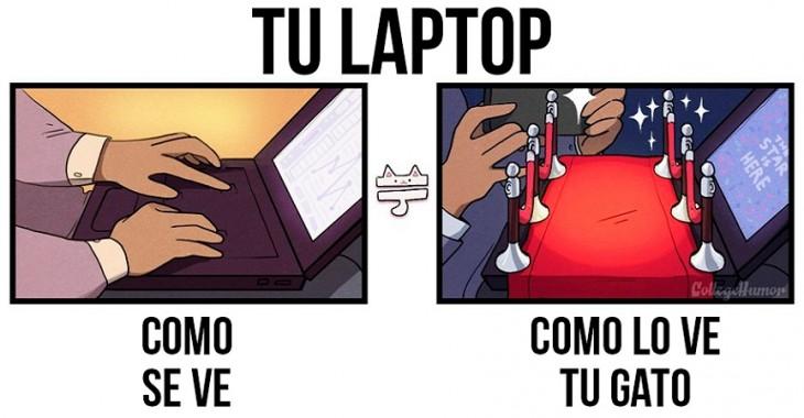tu laptop como se ve y como lo ve tu gato