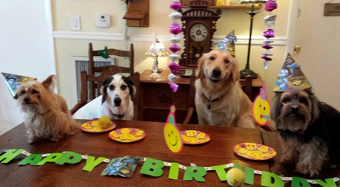 4 perros en festejo de cumpleaños
