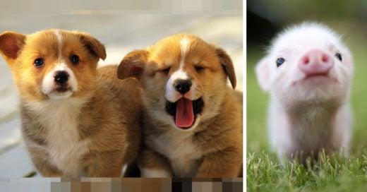 Fotografías de animales bebés