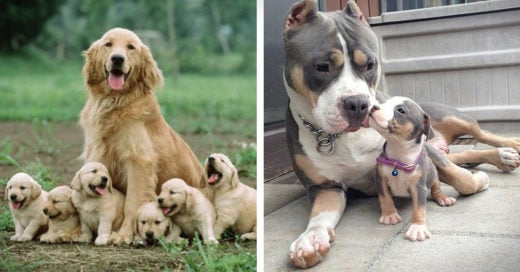 fotos con sus cachorros