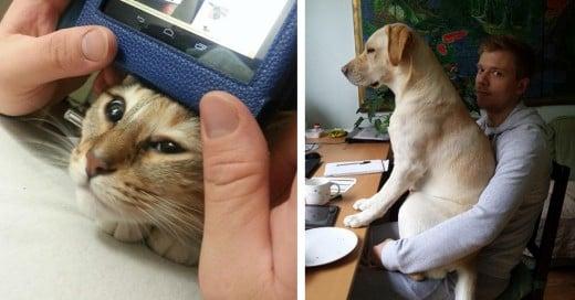 """perros y gatos que no entienden el significado de la frase """"espacio personal"""""""